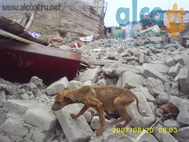 1era visita asistencia animales damnificados terremoto  Pisco 2007 (22)