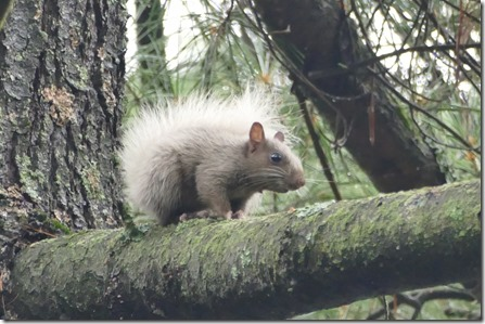 chippewa_falls_lake_wissota_squirrel12