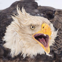 Hafiz Afnan