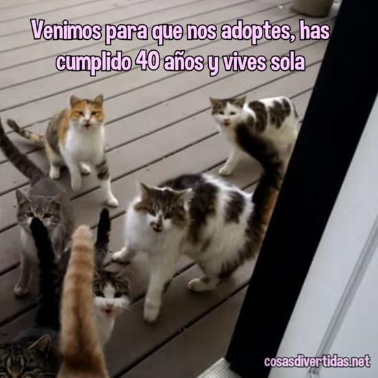 [adoptes+3%5B2%5D]