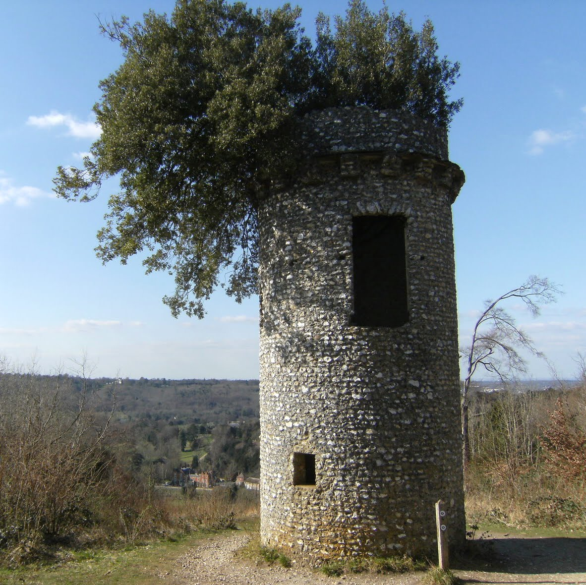 DSCF0632 Broadwood's Folly, Box Hill Country Park