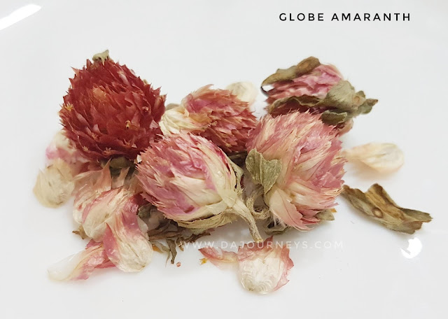 Manfaat dan Khasiat bunga globe amaranth