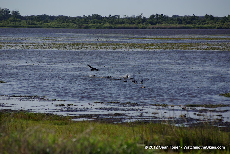 04-06-12 Myaka River State Park - IMGP4452.JPG