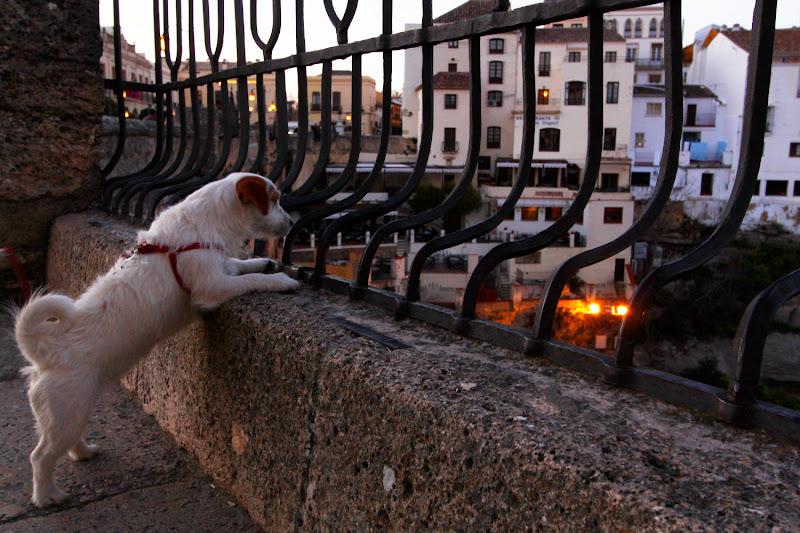 Amy curioseando desde el puente Nuevo de Ronda