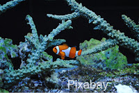 clownfish http://laura-honeybee.blogspot.com/2016/04/13-weeks.html