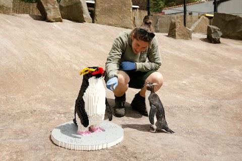 😂 Les gardiens de zoo capturent les réactions amusantes des pingouins lorsqu'ils rencontrent un colocataire LEGO plus grand que nature