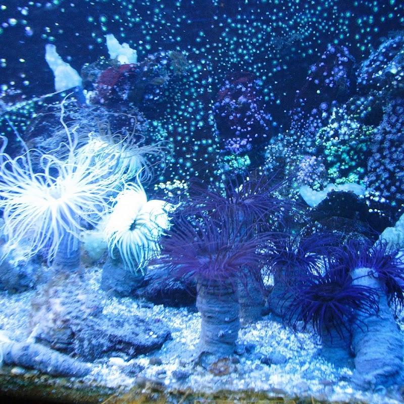 Aquarium_05.JPG
