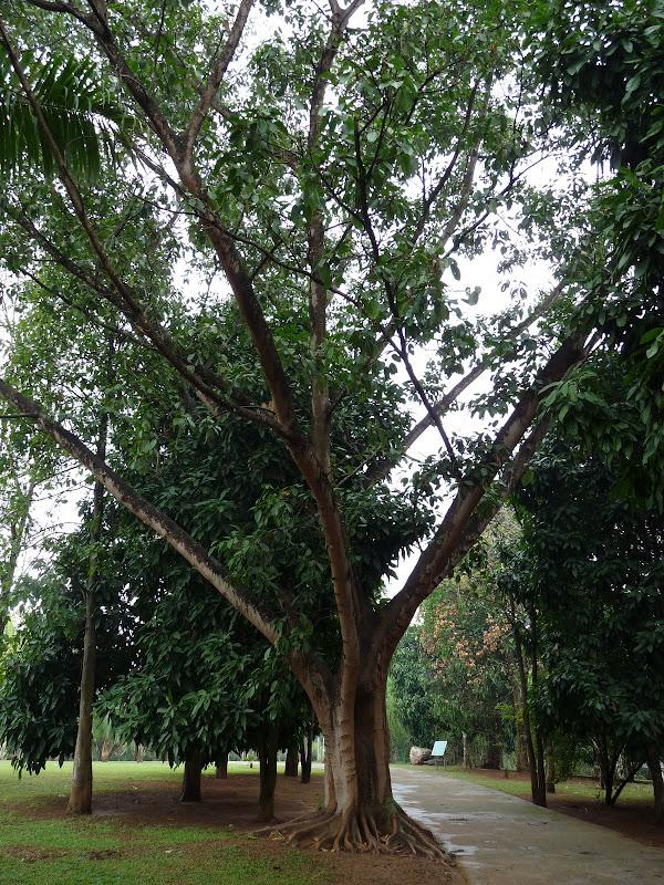 Chine .Yunnan . Lac au sud de Kunming ,Jinghong xishangbanna,+ grand jardin botanique, de Chine +j - Picture1%2B693.jpg