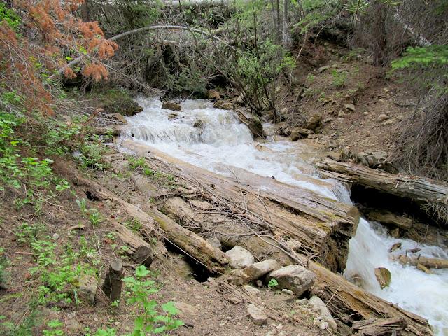 Slippery log bridge at the third stream crossing