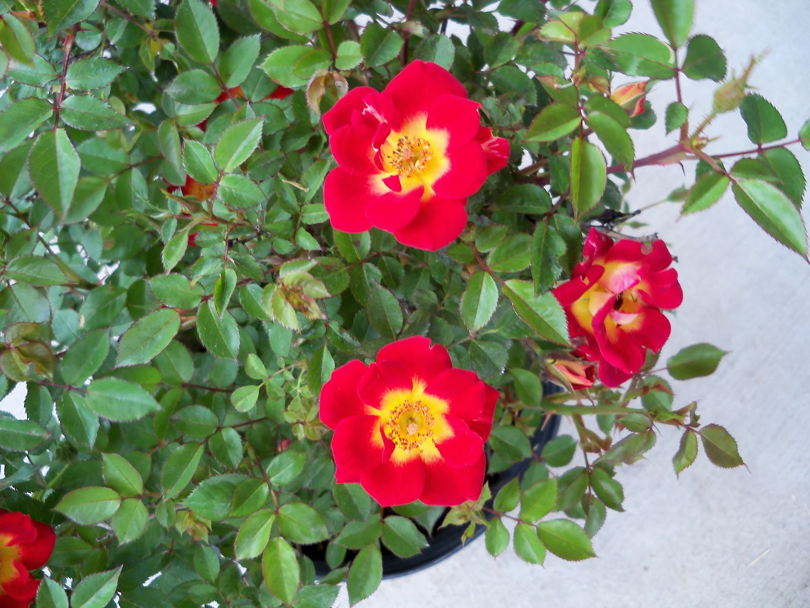 Gardening 2010 - 101_0718.JPG