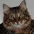 Rachel Moss avatar image