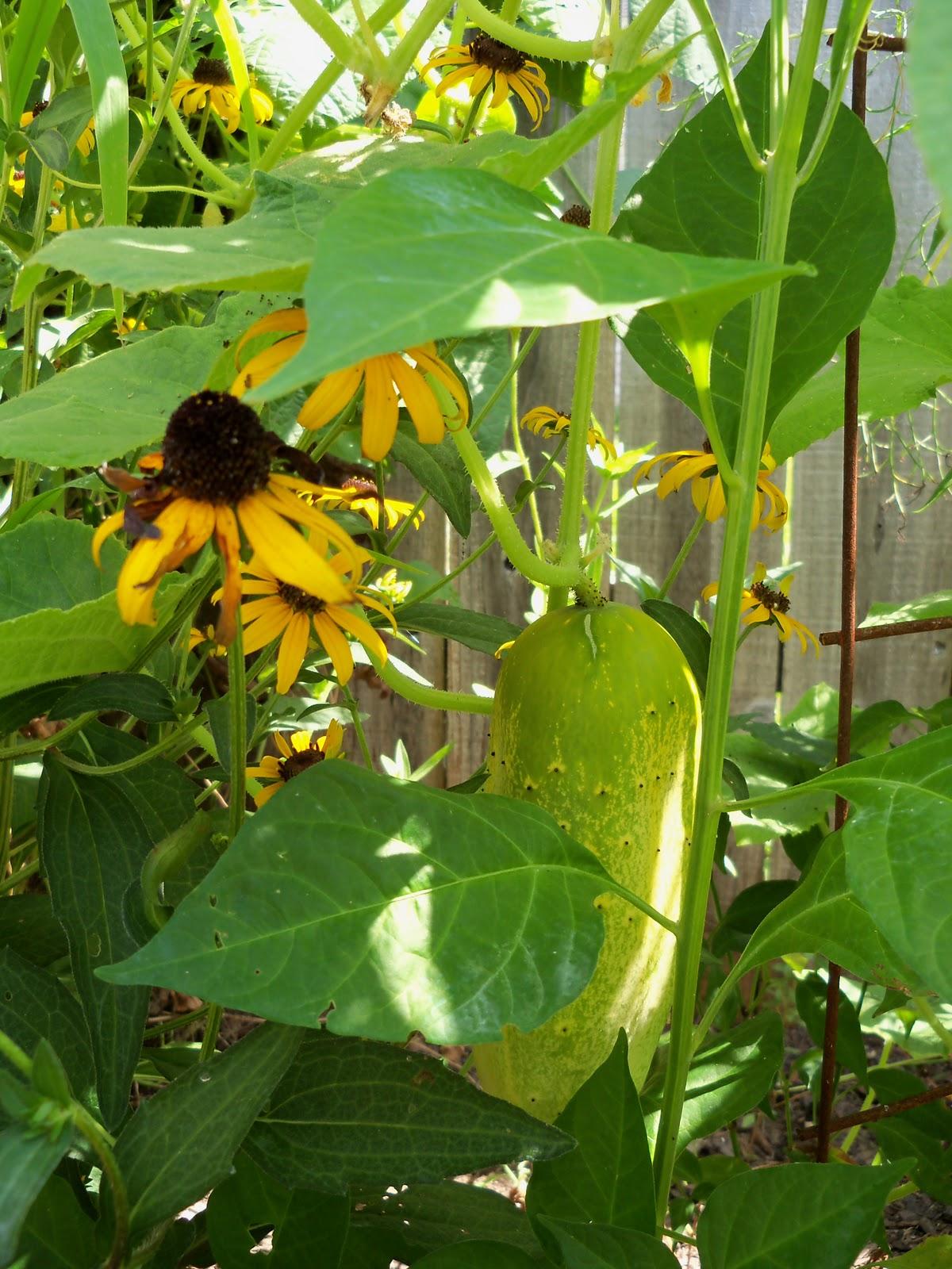 Gardening 2010, Part Three - 101_5078.JPG