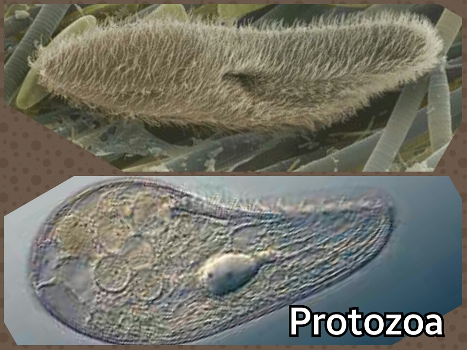 biology facts reproduction in protozoa 48 qs