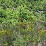 Les Hautes-Courennes (480 m). Saint-Martin-de-Castillon (Vaucluse), 13 mai 2014. Photo : J.-M. Gayman