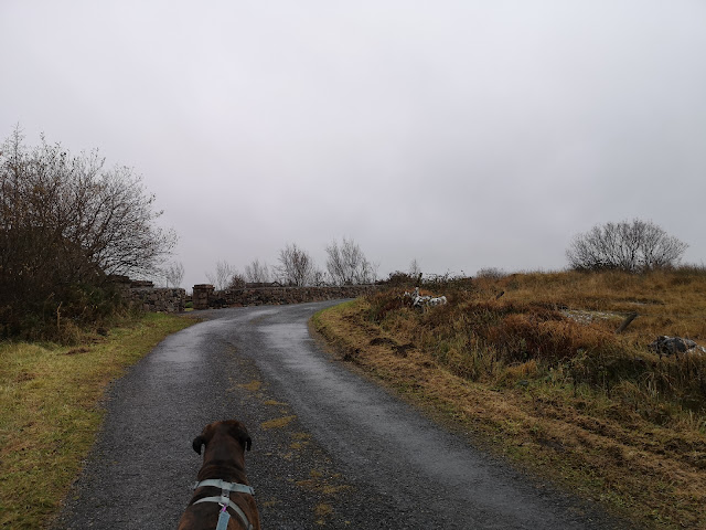 Boxer dog looking up a road white gloomy sky above