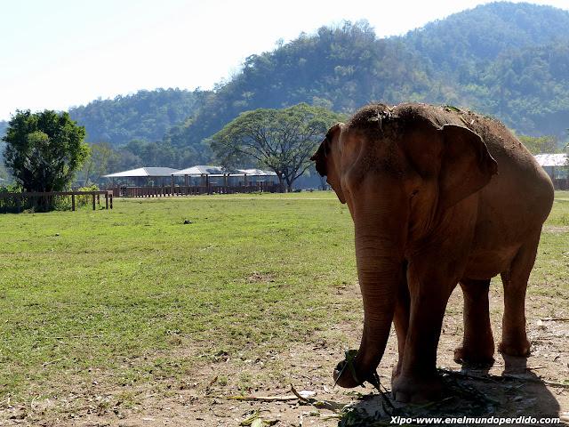elefantes-chiang-mai.JPG