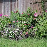 Gardening 2012 - 115_2453.JPG