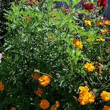 Gardening 2013 - 115_6279.JPG
