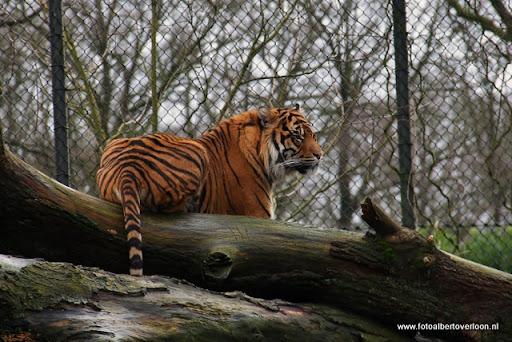 Burgers' Zoo in Arnhem 04-01-1012 (13).JPG