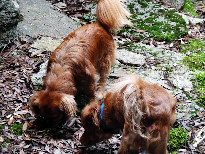 The dogs are looking for mushrooms too!
