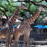 Houston Zoo - 116_8553.JPG