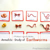The Annelids: Earthworms and {Learn & Play Link Up}