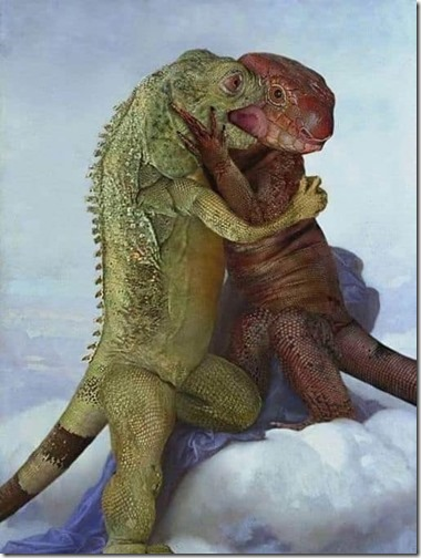 amor entre aniimales (37)