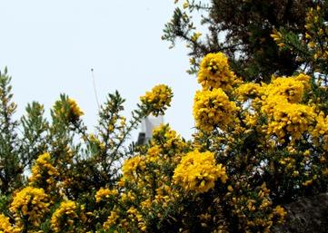17050462 May 19 Grosse In Bloom