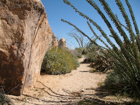 I liked the way the Ocotillo and the rock framed this picture.