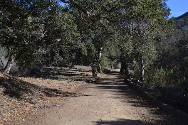 oaks at road side