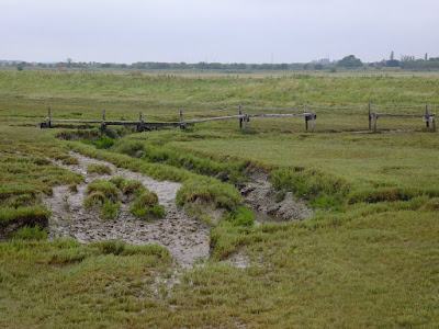 Ramshackle walkways across the marsh