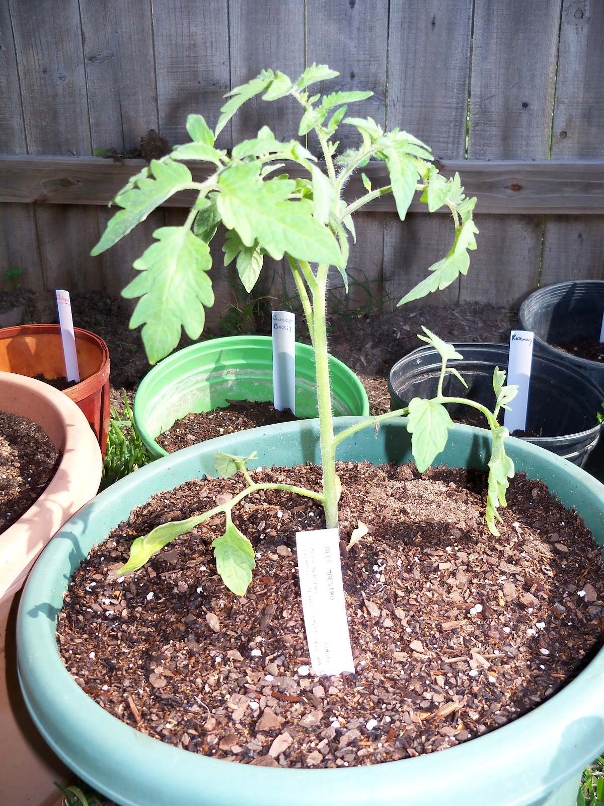 Gardening 2010 - 101_0235.JPG
