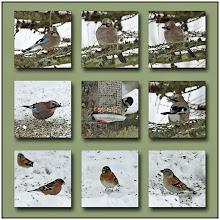 Photo: 26. december 2010 - Endnu flere arter :-)