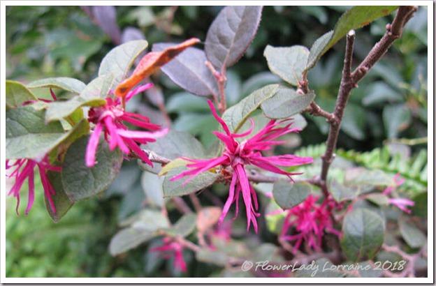 01-08-fringe-flower