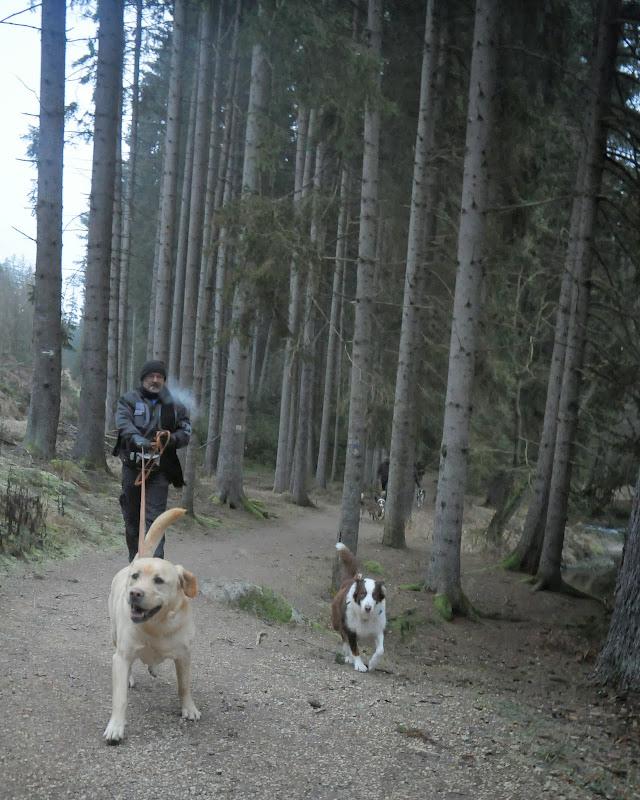 20140101 Neujahrsspaziergang im Waldnaabtal - DSC_9842.JPG