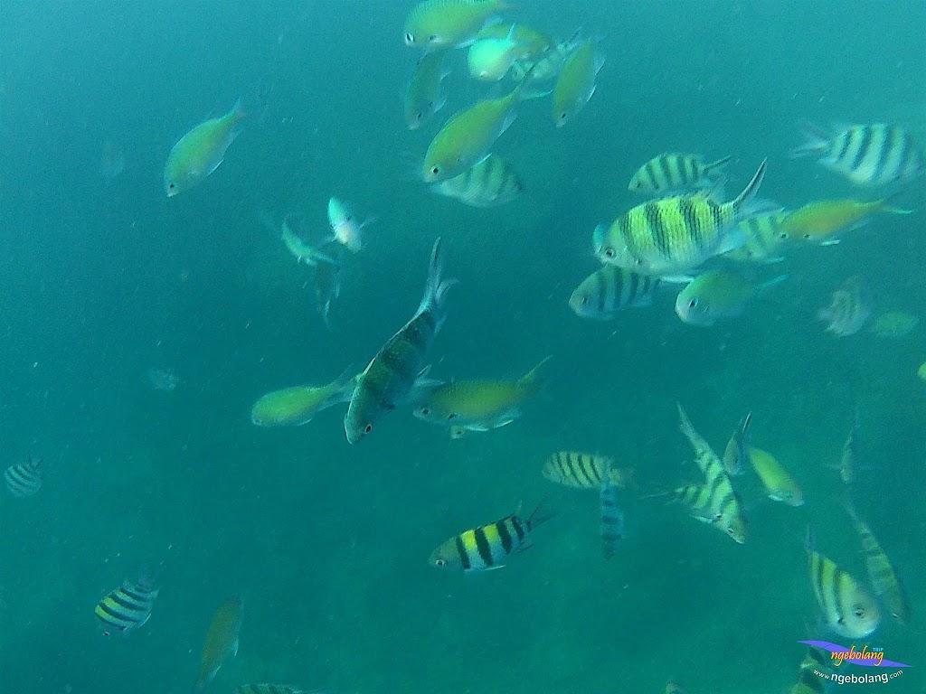 family trip pulau pari 090716 GoPro 47