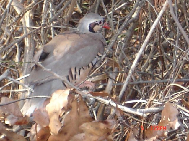"March 2009 - ""bird"" @ Anderson Creek Hunting Preserve"