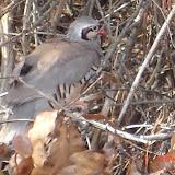 "March 2009 - ""bird"" @ Anderson Creek Hunting Preserve"