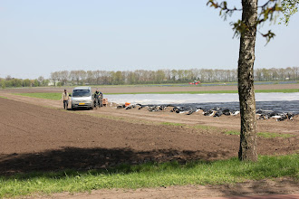 Photo: May 2013: Asparagus field near vacation park Centerparcs Meerdal in America (NL)