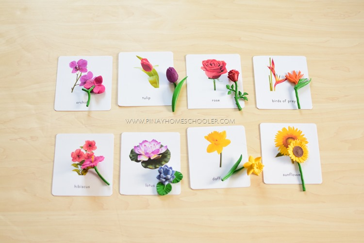Montessori Flower 3 Part Cards