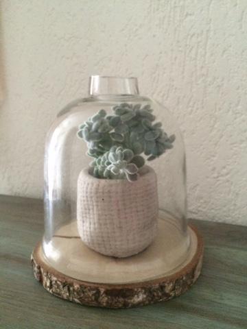 Cactus onder een stolp