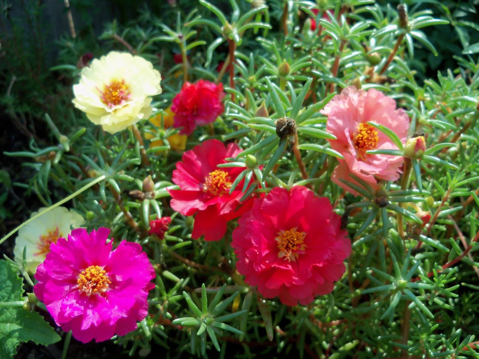 Gardening 2010, Part Two - 101_3468.JPG