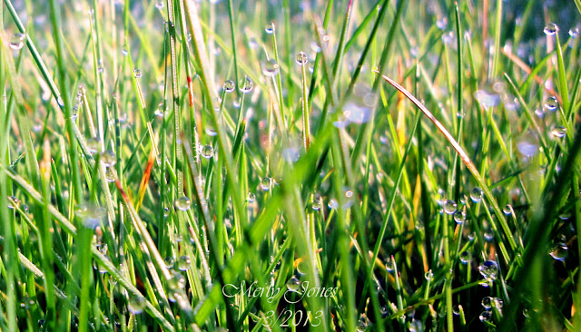 Beautiful morning dew drops on the grass.