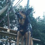 Survival voor Baas en Hond 2012 - IMAG0742.jpg