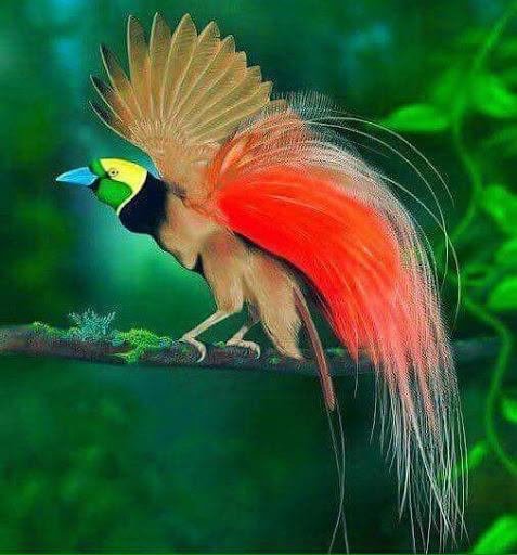 Selamatkan Cendrawasih, Burung Dari Surga Ikon Papua Ini Di Ambang Kepunahan