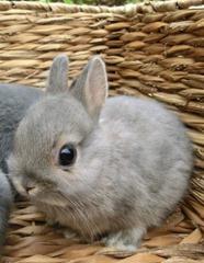 Cute-Rabbit-03 (2)