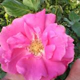 Gardening 2014 - 0412185901.jpg