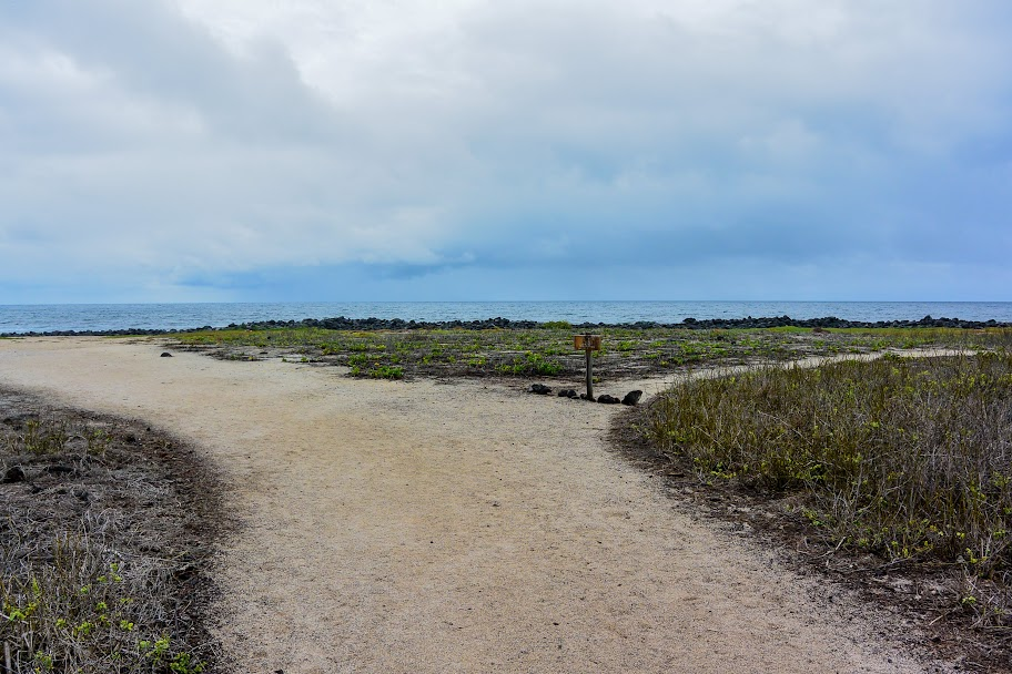 galapagos - Galapagos_FB_2-113.jpg