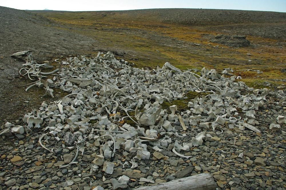 spitsbergen-whale-graveyard-1