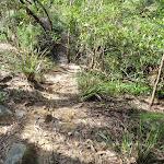 Through the bush (126835)